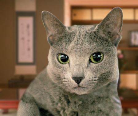 ハイブリッド猫1