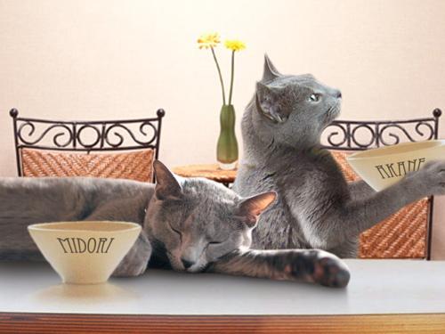 食卓猫オチ