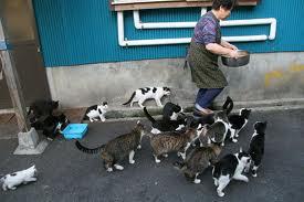 田代島の猫9