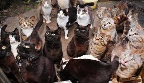田代島の猫7