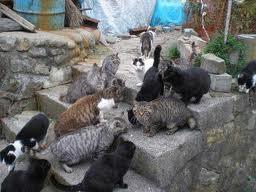 田代島の猫8