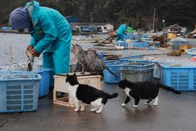 田代島の猫10
