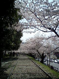 hanami2010
