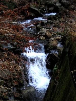 関根川の小滝