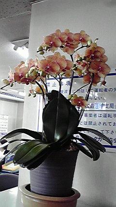 2010041315110000.jpg