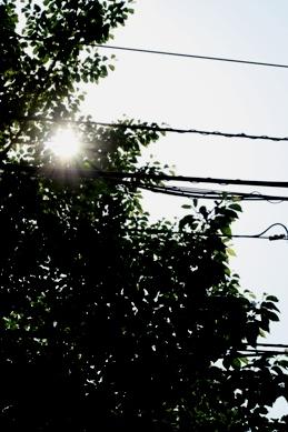 20090511mido.jpg