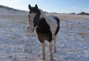 winter horse 1