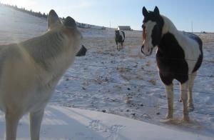 winter horse 2