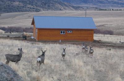 guest cabin 7