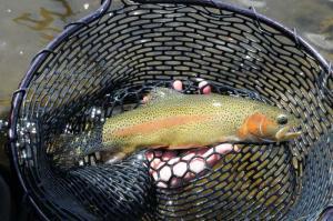 fishing at spring creek 3