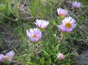 wild flower 5