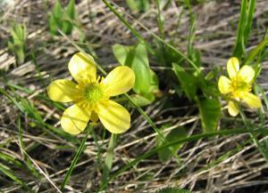 wild flower 9
