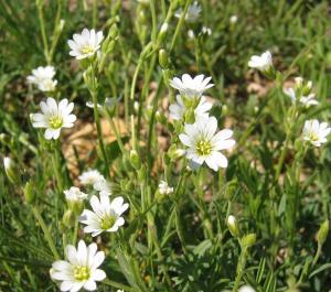 wild flower 11