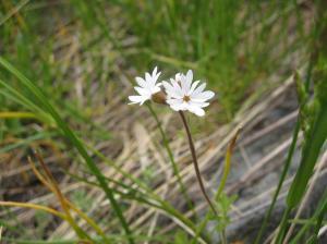 wild flower 13