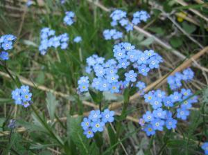 wild flower 15