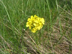 wild flower 16