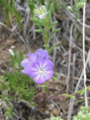 wild flower 19