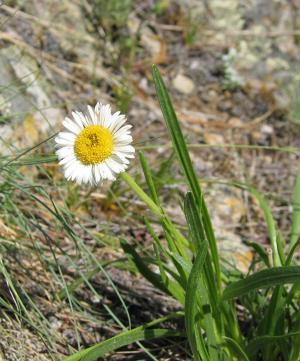 wild flower 24