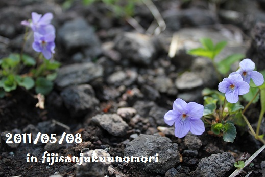 IMG_9513.jpg
