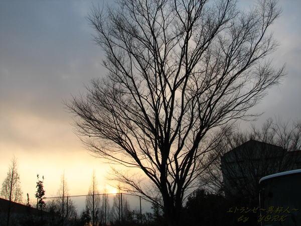 9596木と夕日倉芸にて110215