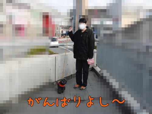 2010223-3.jpg