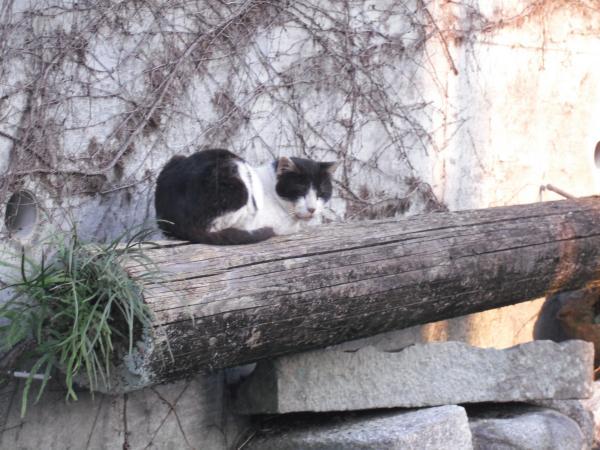 丸太のネコ