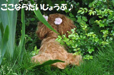 DSC_0149_20110602232046.jpg