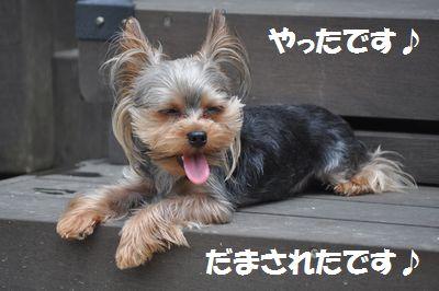 DSC_0155_20110604213005.jpg
