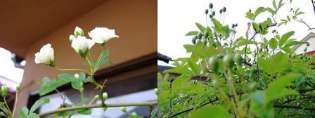 0413mokko-kaika.jpg