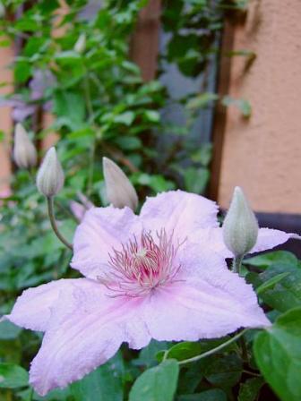 2007_0521marmori2.jpg