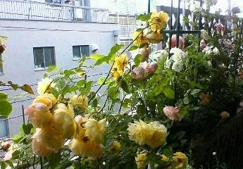 2008_0517ヒカル王子 002