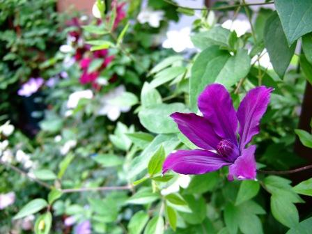 2008_0518薔薇のお茶会 055