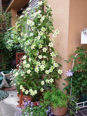 2008_0518薔薇のお茶会 053