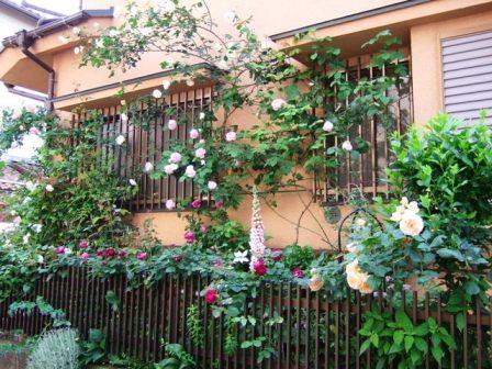 2008_0518薔薇のお茶会 051s