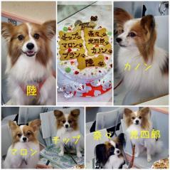 ケーキと誕生日の子