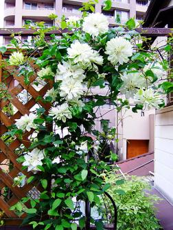 20090421yukiokoshi.jpg