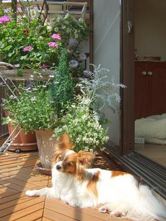 marron-veranda.jpg