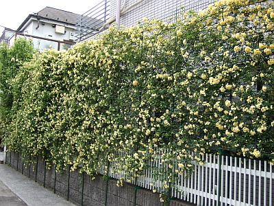 mokko-wall.jpg