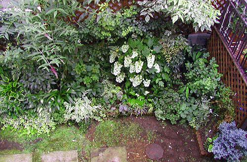 o-0622-shadegarden.jpg