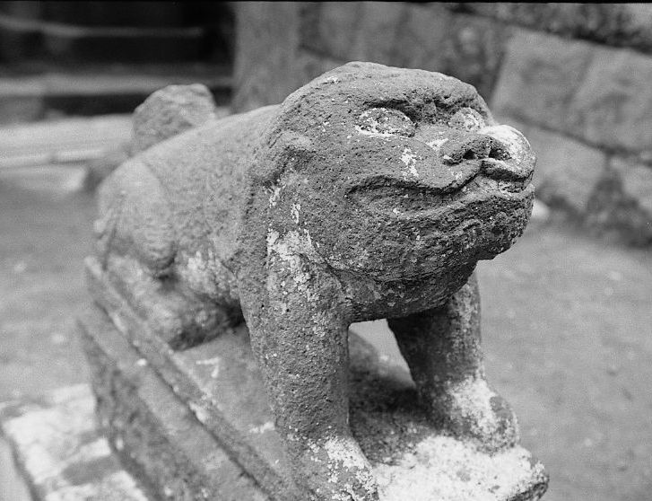 諏訪大神社狛犬吽古