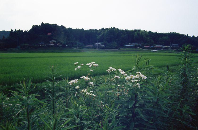 mishou4.jpg