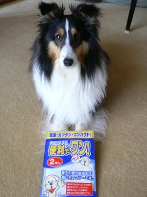 狂犬病と尿検査2