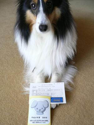 狂犬病と尿検査1
