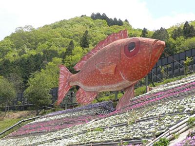 千年藤と芝桜6