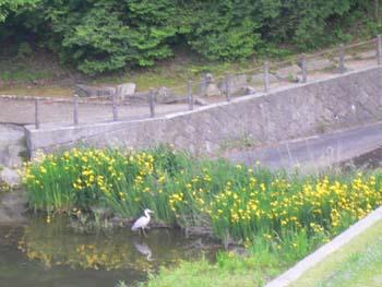 池の周囲2