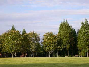 雨上がりの公園1