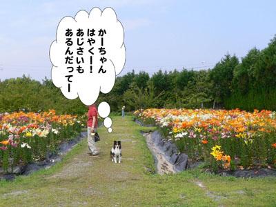 よつばとゆり園9