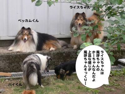 犬のみせ藤田さん3
