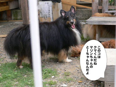 犬のみせ藤田さん2