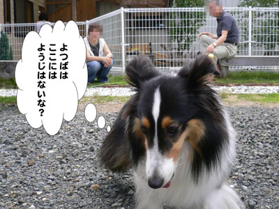 犬のみせ藤田さん4
